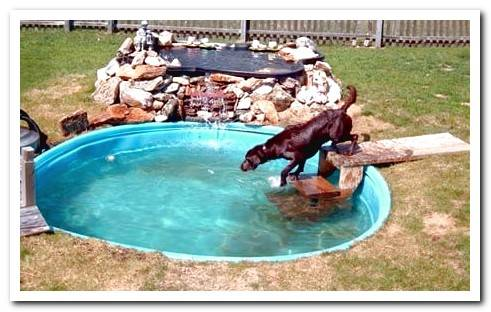 How to Make a Homemade Dog Pool - Step by Step