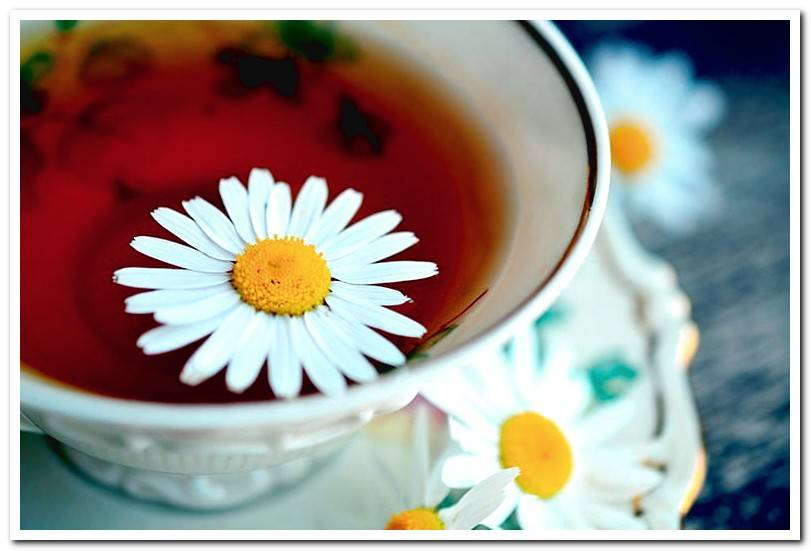 Can I give chamomile to a dog? Uses and benefits