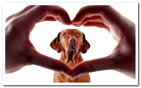 Heart murmur symptoms in dogs and recommended care