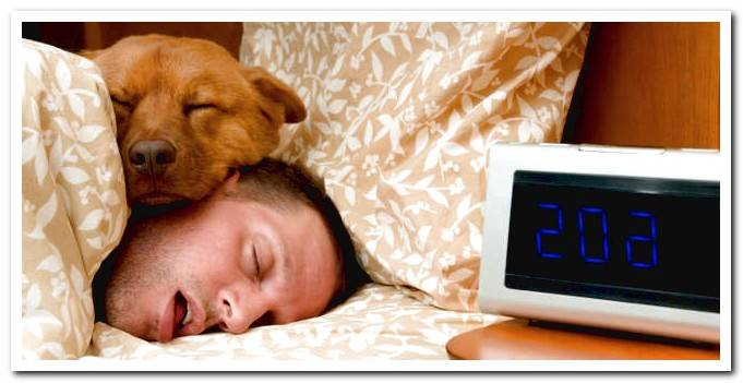 How many hours does an adult dog sleep? And a puppy?