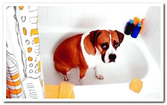 How to avoid bad dog odor