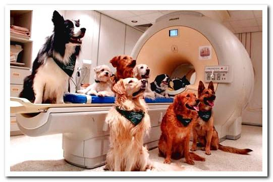 How to know if a dog has cancer? Symptoms