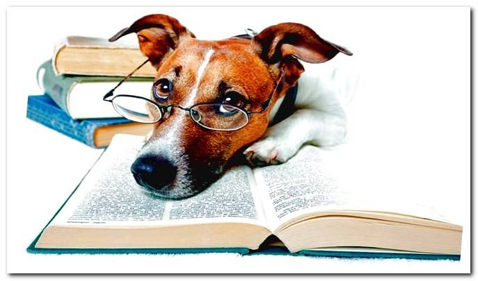 book and dog