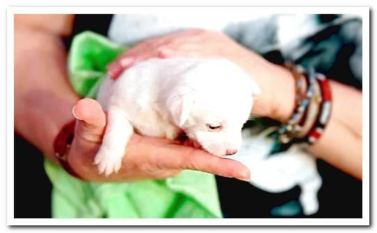 Puppy Feeding: A Complete Guide