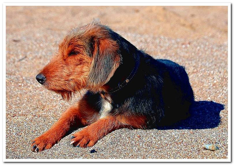 Effects of furosemide in dogs