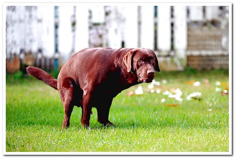 My Dog Has Bloody Diarrhea | Causes