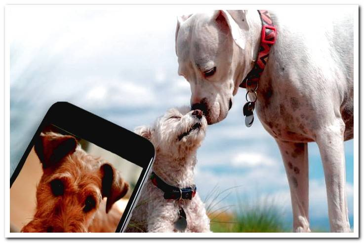 The best apps for dogs: Discover them!