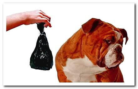 How to prevent my dog ​​from eating feces