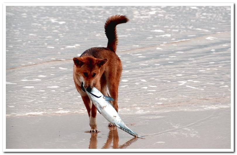 Can dogs eat fish? - Benefits and dangers