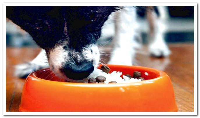 Soft dog diet How to do it and how much to use?