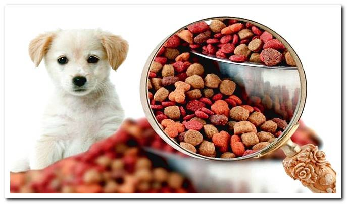 Food allergy in dogs - how to detect and eliminate it