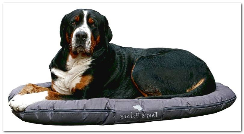 dog-on-bed-circular-fabric-washable