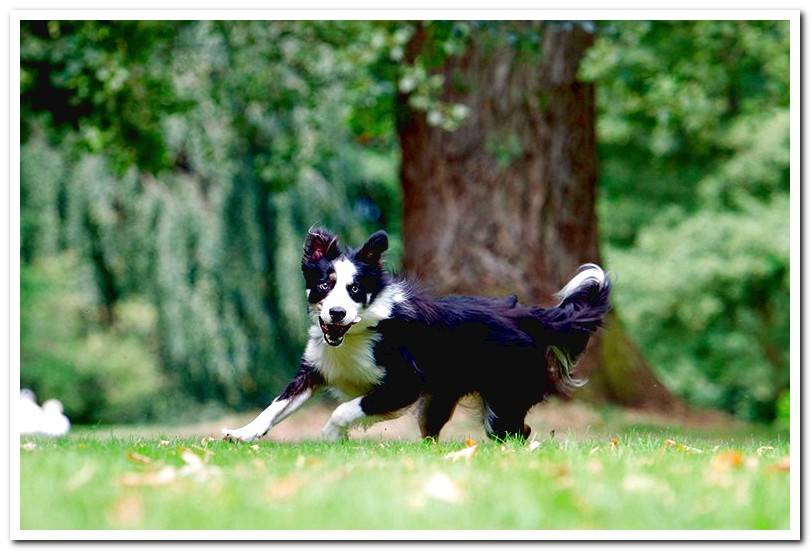 dog-running-in-the-garden