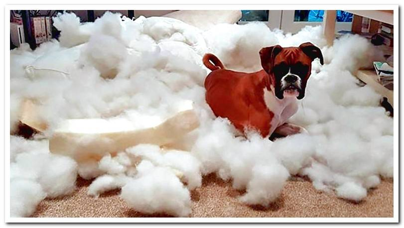 Why does my dog ​​break his bed? Causes and solutions