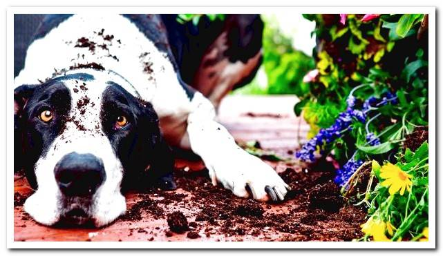 Why does my dog ​​eat dirt? Main reasons