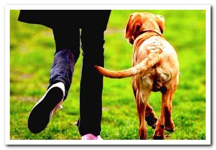 Why do dogs wag their tails? Meaning