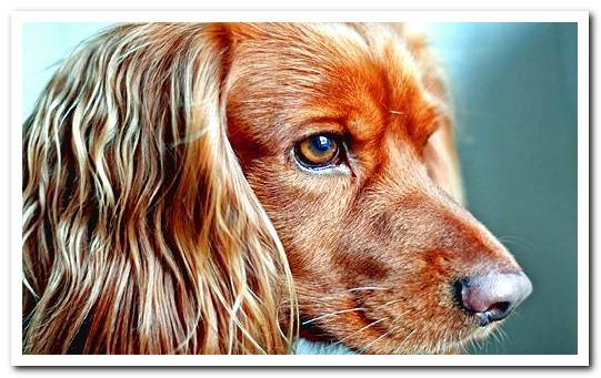 Types of hair in dogs and necessary care