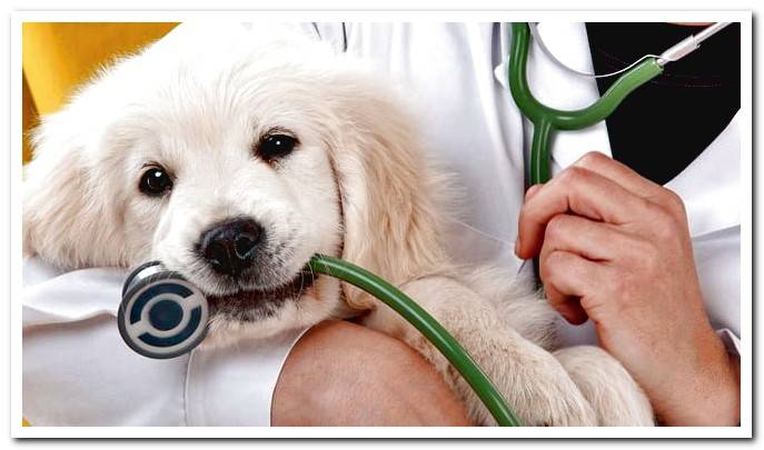 What is canine distemper and how to cure it