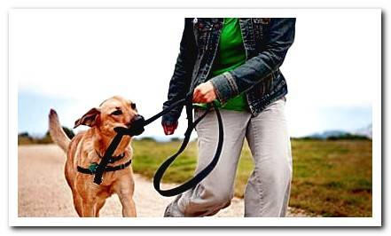 Benefits of walking with your dog