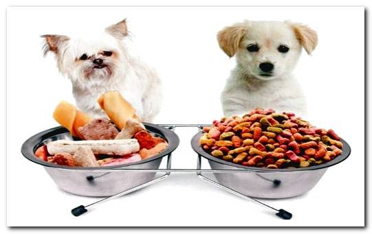 Guide to buying quality dog ​​food