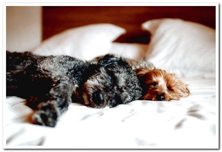 dogs-sleeping-on-a-bed
