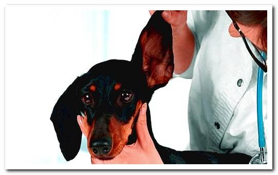 Dog Fungi | Causes, symptoms and effective treatments