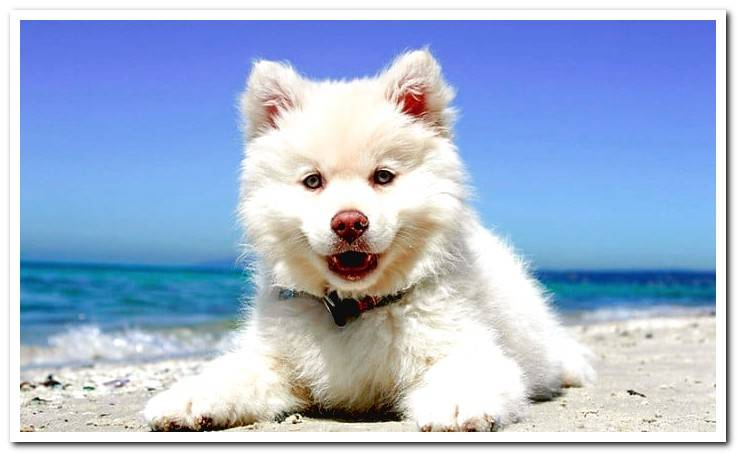 puppy-sunbathing-on-the-beach