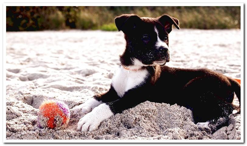Does your dog eat dirt? | Cauasas and what to do to avoid it