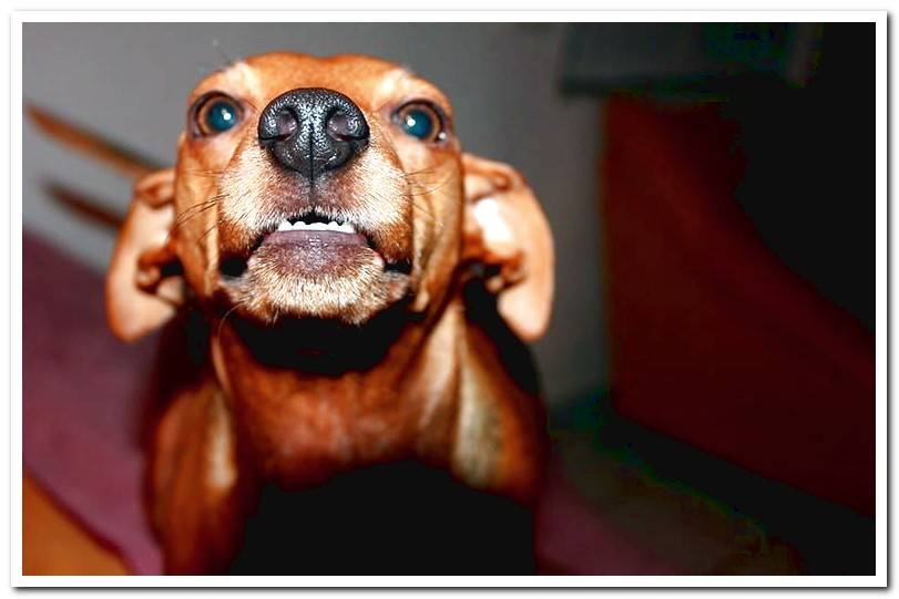How do you know if a dog is angry? 7 Clear signs