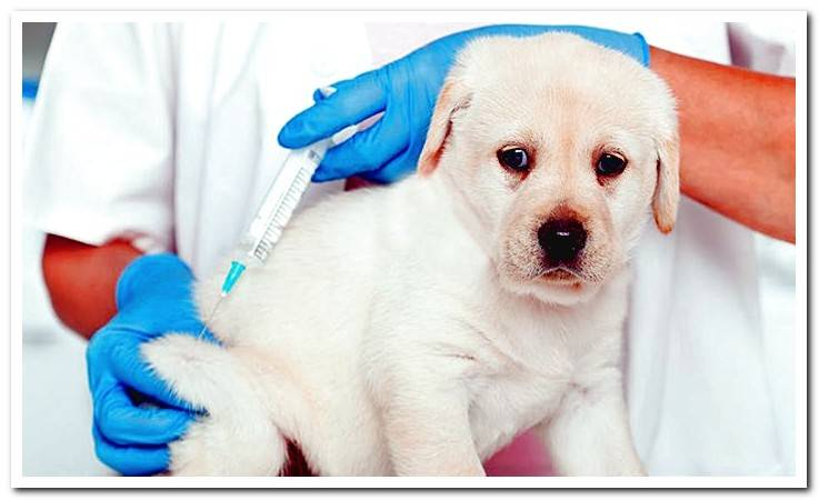 Vaccines for Puppies When to put them?