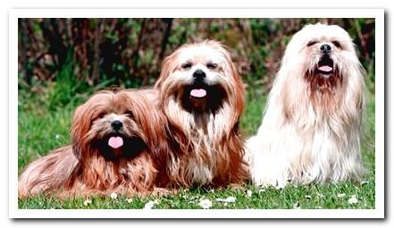 20 dog breeds that DO NOT shed hair