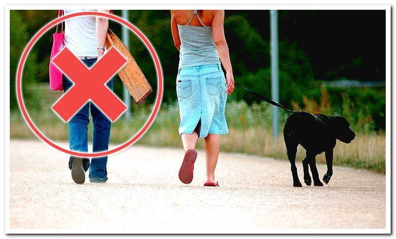 Can I walk my dog? Coronavirus in Spain