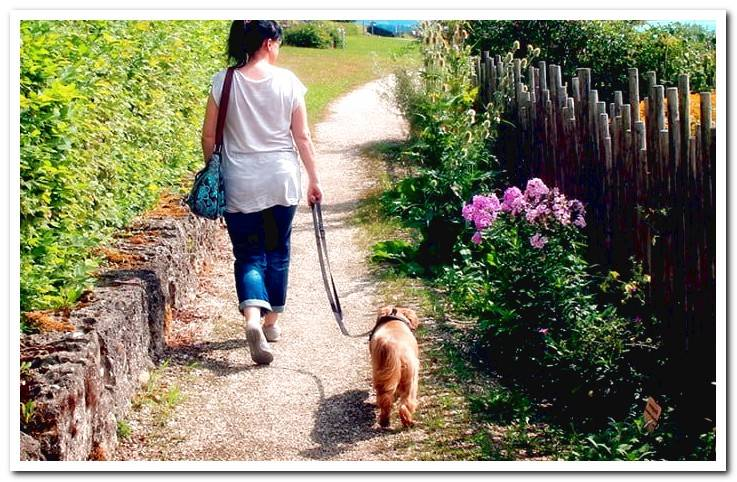 How to walk a dog correctly? Tricks and tips